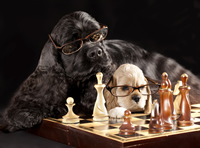 smart dogs strategizing a financial chess game